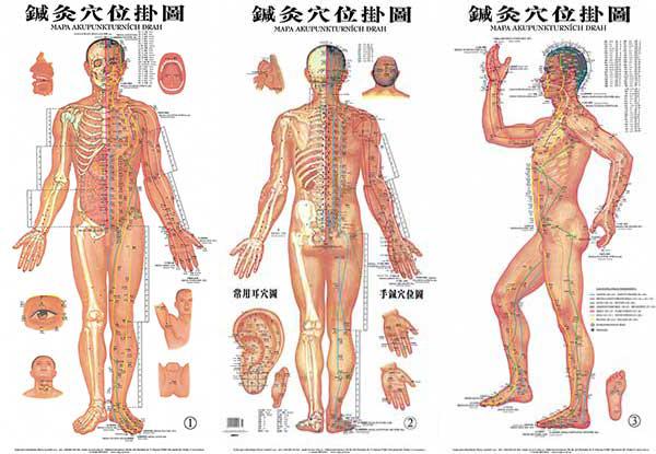 Mapa Akupunkturnich Bodu Akupunkturni Mapa Tela 1 3 40 5cm X